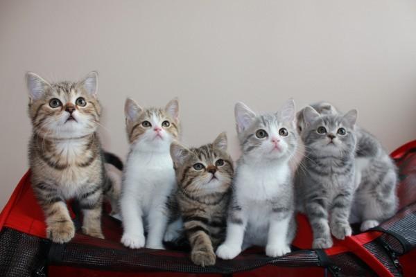 Котята и прививки