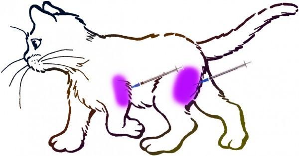 Прививка кошке, что делать