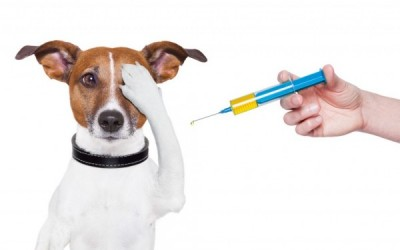 График прививок для собак