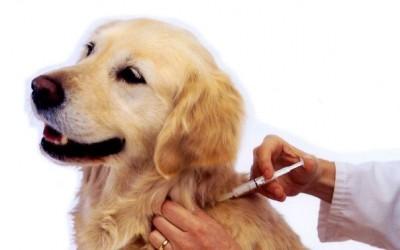 Прививка для собак