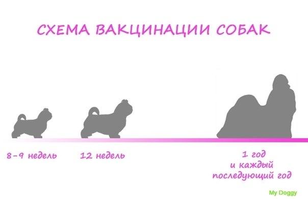 Первая прививка щенкам