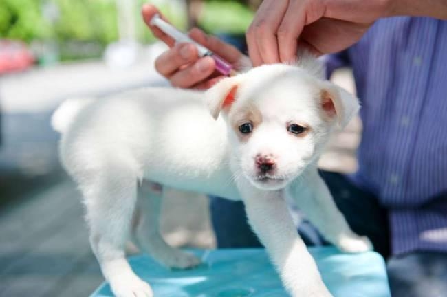 прививки собаке